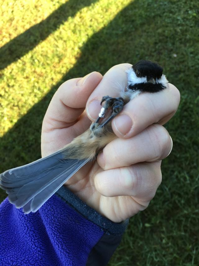 birdbanding18b.jpg
